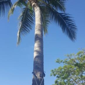 RCSE Social Hour: Fiji Getaways 20 October 6:30PM